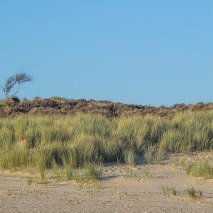 Coast Photography | Lone tree
