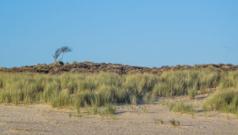 Coast Photography   Lone tree